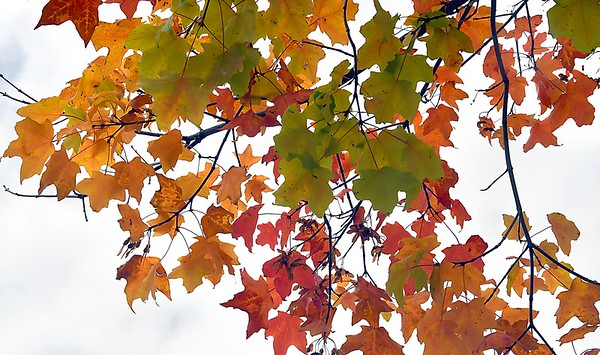 Fall color preview 2