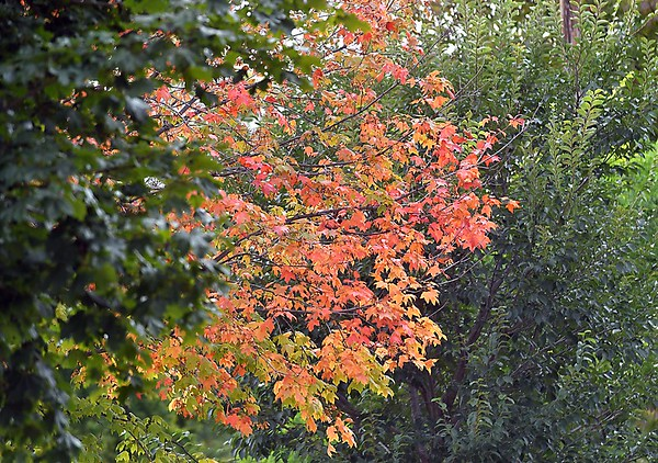 Fall color preview