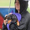 Pat Christman <br /> Marya Flyn and her dog Gus try to stay dry during the Arf Walk Saturday.