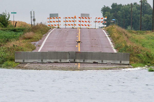 A cat crosses Highway 12 between two barriers north of Courtland. The road, scheduled to be fixed in 2020, is often flooded due to a nearby marsh. Photo by Jackson Forderer