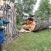 Duck Lake tree felled