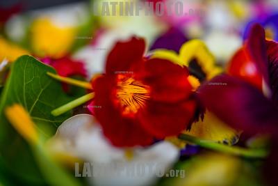 BRASIL - SÃO JOSE DOS CAMPOS - SP BRASIL 2019-09-11 CIDADES GASTRONOMIA - Vista de diversas flores comestiveis cultivadas de maneira organica pela Eng Agronoma Cyntia Salles que faz vendas diretas para consumidores e restaurantes especializados , as flores alem de ter um fator estetico tem diversos nutrientes / Flores comestibles que son cultivadas orgánicamente por el Ing. Agronoma Cyntia Salles y vendidas directamente a consumidores y restaurantes especializados / Edible flowers that are organically grown by Eng Agronoma Cyntia Salles and sold directly to consumers and specialized restaurants / Brasilien : Essbare Blumen die von Eng Agronoma Cyntia Salles biologisch angebaut und direkt an Verbraucher und spezialisierte Restaurants verkauft werden © Lucas Lacaz Ruiz/LATINPHOTO.org