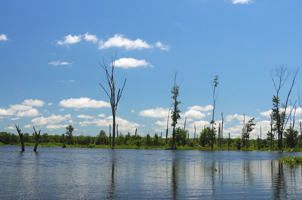 Tribune-Star file/Jim Avelis<br /> Highwater: The Wabashiki Wetlands just east of West Terre Haute has seen the effect of the flooding of the Wabash River, with much of the land now covered with the backwaters of the river.(File photo from June of 2010)