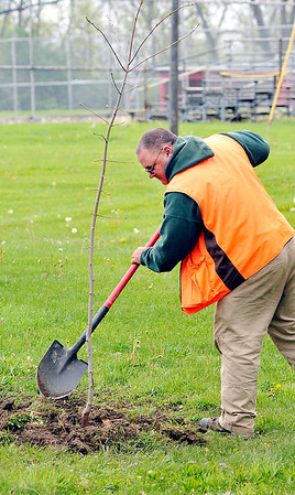 John P. Cleary |  The Herald Bulletin<br /> Greg Spencer, Grandview Golf Course superintendent and Tree Commission Liaison, finishes up as the city planted a red maple tree in Shadyside Park as part of Anderson Parks & Recreation Department's Earth Day/Arbor Fest activities Saturday.