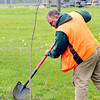 John P. Cleary    The Herald Bulletin<br /> Greg Spencer, Grandview Golf Course superintendent and Tree Commission Liaison, finishes up as the city planted a red maple tree in Shadyside Park as part of Anderson Parks & Recreation Department's Earth Day/Arbor Fest activities Saturday.