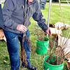 John P. Cleary    The Herald Bulletin<br /> Eric Strother, of Anderson, picks out some Black Gum tree seedlings during the Anderson Parks & Recreation Department's Earth Day/Arbor Fest Saturday at Shadyside Park.