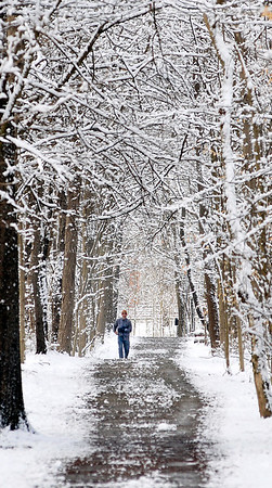 John P. Cleary | The Herald Bulletin<br /> A tunnel of snow-covered branches frames this walker as he traverses through the winter wonderland of trail 5 at Mounds State Park Monday morning after a overnight April snowfall.