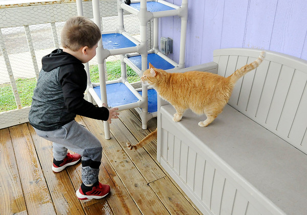 Don Knight   The Herald Bulletin<br /> Jeremiah Bliss, 4, plays with cats while visiting the Animal Protection Leauge on Tuesday.