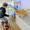 Don Knight | The Herald Bulletin<br /> Jeremiah Bliss, 4, plays with cats while visiting the Animal Protection Leauge on Tuesday.
