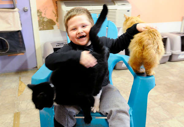 Don Knight | The Herald Bulletin<br /> Jeremiah Bliss, 4, pets cats at the Animal Protection Leauge on Tuesday. Bliss used money his uncle had given him to buy toys, to purchase cleaning supplies  as well as dog and cat treats for the shelter.