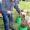 John P. Cleary |  The Herald Bulletin<br /> Eric Strother, of Anderson, picks out some Black Gum tree seedlings during the Anderson Parks & Recreation Department's Earth Day/Arbor Fest Saturday at Shadyside Park.