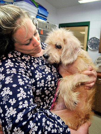 John P. Cleary   The Herald Bulletin  <br /> Molly Breckenridge holds Mikey, one of 19 dogs rescued over the weekend from an animal hoarding case in Alexandria, at the Animal Protection League Monday. Breckenridge is giving Mikey a foster home until he is adopted.