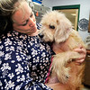 John P. Cleary | The Herald Bulletin  <br /> Molly Breckenridge holds Mikey, one of 19 dogs rescued over the weekend from an animal hoarding case in Alexandria, at the Animal Protection League Monday. Breckenridge is giving Mikey a foster home until he is adopted.