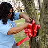 Don Knight | The Herald Bulletin<br /> Nakia Coleman places a ribbon around a tree as Citizen's Plaza Park is decorated in memory of victims of homicide or death by impaired drivers on Friday. The Survivors of Homicide and Impaired Driving Fatalities will have the park decorated through April and will conduct an annual candlelight vigil starting at 6 p.m. Friday at the Aletheia Fellowship and Ministry Center.