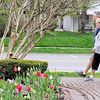 Don Knight | The Herald Bulletin<br /> Walkers pass by tulip bulbs in bloom at Falls Park in Pendleton on Tuesday. The work week forecast is calling for a chance of rain on Wednesday and Thursday.
