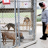 Don Knight | The Herald Bulletin<br /> Hannah Hulett fills dogs' water bowls at the Madison County Humane Society on Thursday. Hulett volunteers at the shelter as part of the Veterinary Careers Program at D26.