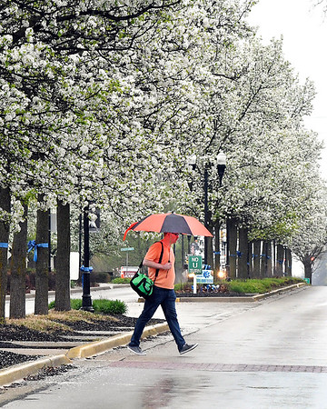 John P. Cleary   The Herald Bulletin <br /> Umbrellas were the order of the day as students walked through the Anderson University campus in a constant rain Thursday afternoon.
