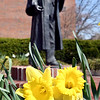 With the stretch of warm days the daffodils have come into bloom in the area like these flowers that surround the sculpture of Dr. John Morrison, Anderson University's first president, on the AU campus.<br /> Overnight temperatures are to drop to below freezing with a freeze warning out for early Friday morning.