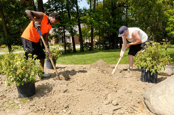 From left, Ezra Koskei and Daniel Johnson plant Summer Snow Flake Viburnum in a new garden on Anderson University's campus on Wednesday. Move in day for new students is Thursday and classes start back next Tuesday.