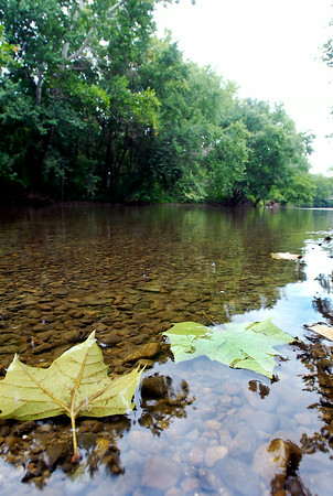 John P. Cleary   The Herald Bulletin<br /> Fallen maple leaves gently float down steam as the rocky bed shows through the clear waters of White River in the Daleville area Monday afternoon. This stretch of the river would be affected by the proposed Mounds Lake Reservoir.