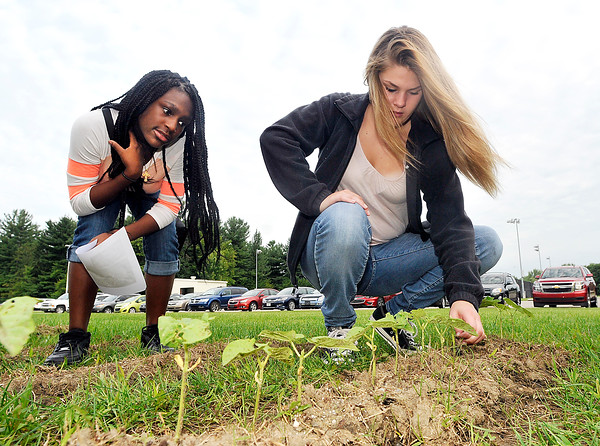 John P. Cleary | The Herald Bulletin<br /> Highland Middle School  students Antonisha Brown and Alexis Phipps check out the green beans that are coming up in the garden that the new agriculture class at the school as planted.  Both girls are eighth graders.