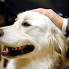 John P. Cleary |  The Herald Bulletin<br /> Therapy dog Judd provides affection and comfort to the people he visits.
