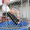 Don Knight | The Herald Bulletin<br /> David Hinson, manager of Northgate True Value, sits in a dunk tank during a St. Jude Benefit at Northgate True Value on Saturday.