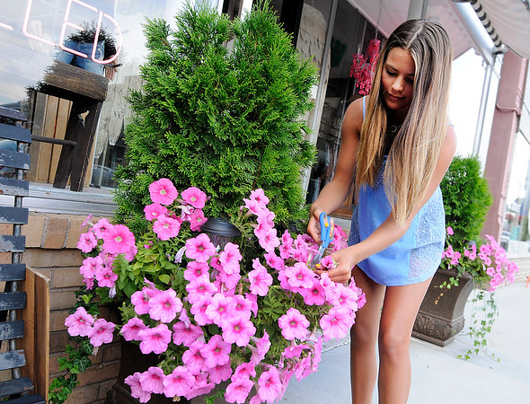Don Knight | The Herald Bulletin<br /> Riley John removes old blooms from a petunia to encourage new blooms to grow in a flower pot in front of the B'Dazzled Boutique on State Street in Pendleton on Wednesday.