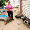 Don Knight | The Herald Bulletin<br /> Lily Harsh stands in her back yard with her three pet pigs on Tuesday. Harsh is seeking a variance from the city's livestock ordinance so she can keep her pigs at her Anderson home.