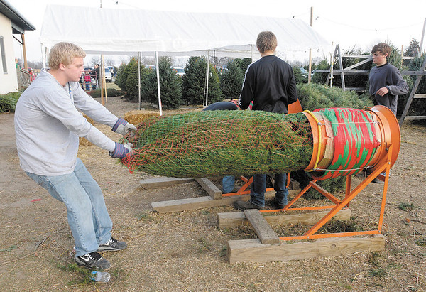 Alec Parsley wraps a Christmas tree for a customer at Piney Acres in Fortville on Saturday December 1, 2012.