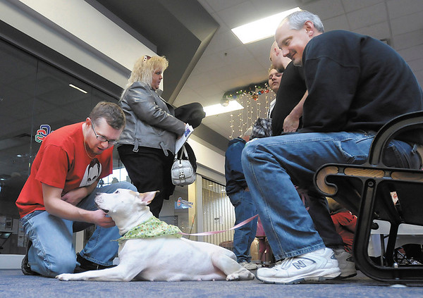 Clark Purvis pets Savanah as Curt Duncan holds her leash during the Season of Giving Alternative Gift Fair at Mounds Mall on Saturday. Savanah was hit by and car and left for dead until a passer by brought her to the Animal Protection League. She is recovering from a broken leg and dislocated hip and is currently part of the Leagues FIDO program.