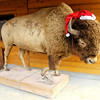 A taxidermy bison stands outside Bison World on Indiana 37 north of Noblesville. The taxidermy at Bison World is eye catching including a long horn steer but the Bison burgers are the biggest seller. Bison World wanted to bring Bison to Lapel at the location of the former Brockway golf course but the deal has fallen through.