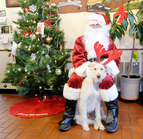 Don Knight / The Herald Bulletin<br /> Golden doodle Raylan poses for a photo with Santa at South Anderson Veterinary Clinic in Anderson on Friday. Pictures and photo CDs of pets with Santa were available for a donation to the Madison County Humane Society.