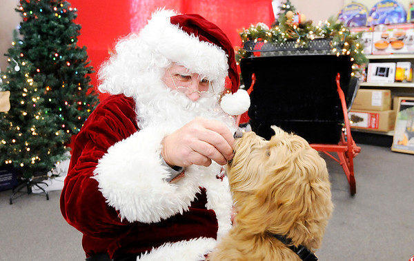 Don Knight |  The Herald Bulletin<br /> Mini goldendoodle Lily Hannah gets a treat from Santa at Northgate True Value Hardware in Anderson on Saturday. Pet owners could have their pet's photo taken with Santa for a $10 donation benefiting the Madison County Humane Society.