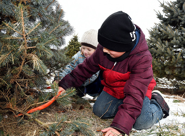 John P. Cleary | The Herald Bulletin<br /> Abel Price, 9, and his brother Exzavier, 8, finish cutting on the family's Christmas tree they picked out at Millbrook Tree Farm in Yorktown this past Monday.