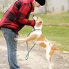 Don Knight | The Herald Bulletin<br /> Volunteer Laura Market walks Lucia, a Labrador Retriever and Shepherd mix, up for adoption at the Animal Protection League on Thursday.