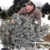 John P. Cleary | The Herald Bulletin<br /> Gabriel Price, of Daleville, loads up the family's Christmas tree at Millbrook Tree Farm Monday after they selected their tree and then cut it down.