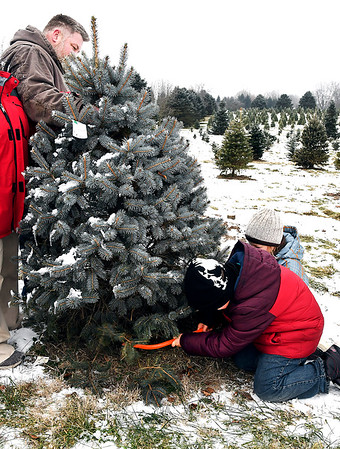 John P. Cleary   The Herald Bulletin<br /> As Gabriel Price steadies the tree, his sons Exzavier, 8, and Abel, 9, finish cutting the trunk of the family's Christmas tree they picked out at Millbrook Tree Farm in Yorktown this past Monday. The Prices live in Daleville.