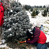 John P. Cleary | The Herald Bulletin<br /> As Gabriel Price steadies the tree, his sons Exzavier, 8, and Abel, 9, finish cutting the trunk of the family's Christmas tree they picked out at Millbrook Tree Farm in Yorktown this past Monday. The Prices live in Daleville.