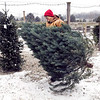 John P. Cleary | The Herald Bulletin<br /> Ronnie Reed, of Millbrook Tree Farms, carries up a tree after the customer had picked it out from their pre-cut selection of trees.