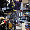 Don Knight | The Herald Bulletin<br /> Animal Protection League vet tech Ashley McGurn uses a step ladder to get to a new arrival at the Animal Protection League on Thursday. The cat room is stacked floor to ceiling with kennels.