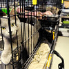 Don Knight | The Herald Bulletin<br /> A cat reaches a paw out seeking some attention while waiting for adoption from the Animal Protection League on Thursday.