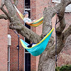 John P. Cleary |  The Herald Bulletin<br /> Anderson University freshmen Levi Vick and Vanessa Schuldt relax in their hammocks high in this tree in front of Rice Hall Tuesday afternoon.