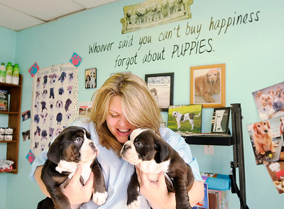 Don Knight | The Herald Bulletin Sheila Curtiss, owner of Dogz In Sudz, holds two bulldog puppies at her shop in Pendleton. Curtiss was voted as the best pet groomer by readers of The Herald Bulletin.