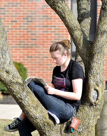 John P. Cleary |  The Herald Bulletin<br /> As the Presidents' Day temperatures hit the mid-60's, Anderson University sophomore Molly Sluss, of Inidanapolis, finds the crook of this tree to be the perfect place to study while enjoying the warm sunshine Monday afternoon.