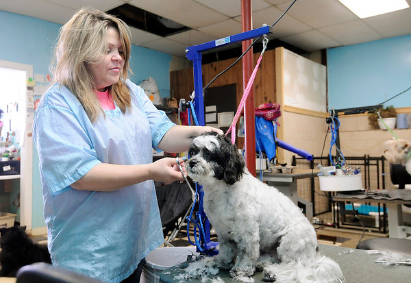 Don Knight   The Herald Bulletin<br /> Sheila Curtiss, owner of Dogz In Sudz, was voted as the best pet groomer by readers of The Herald Bulletin.