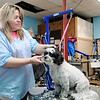 Don Knight | The Herald Bulletin<br /> Sheila Curtiss, owner of Dogz In Sudz, was voted as the best pet groomer by readers of The Herald Bulletin.