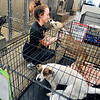 John P. Cleary | The Herald Bulletin<br /> Animal Protection League employee Ryan McCartney checks on Pepper in the crowded kennel area of the facility. The protection league has been housing animals in temporary kennels along the hallways since all the permanent ones are full.