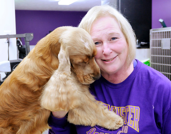 Don Knight | The Herald Bulletin<br /> Chris Kirby, a groomer at 2 Guyz Boutique for Pets, co-owns English cocker spaniel Gordon with Karen Florentine. Gordon won Best of Breed at the prestigious Westminster Kennel Club Dog Show in New York City.