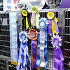 Don Knight | The Herald Bulletin<br /> English cocker spaniel Gordon has won numerous awards in his career at a show dog including Best of Breed at the prestigious Westminster Kennel Club Dog Show in New York City.